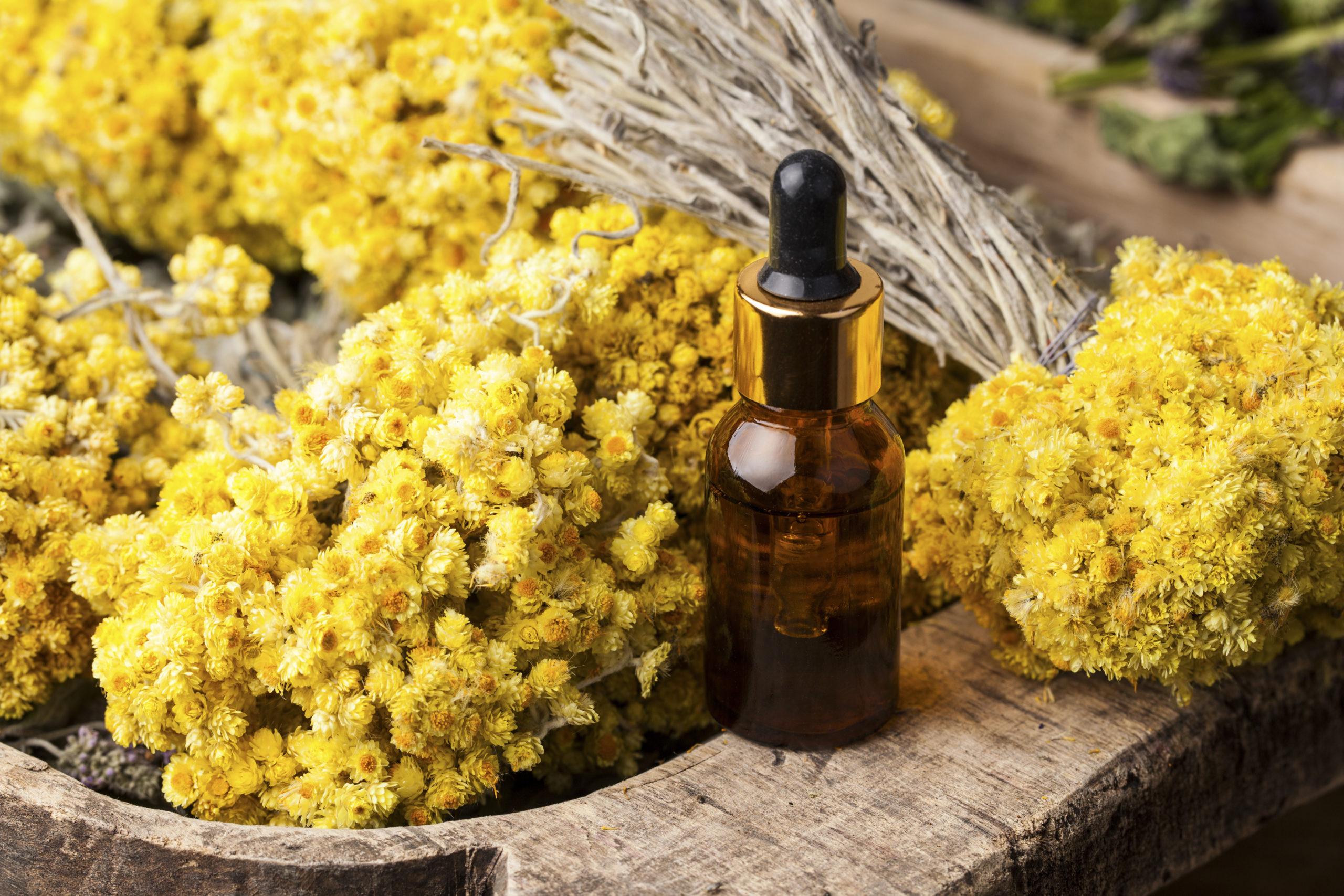 une huile essentielle de choc : l'hélichryse italienne (helichrysum italicum)