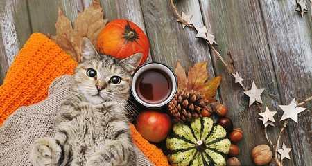 Un chat en automne : sérénité et réconfort